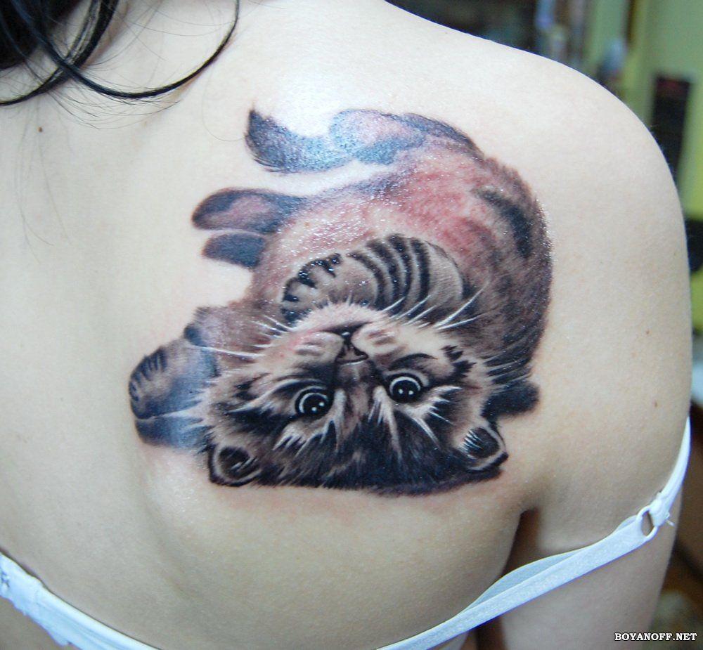 Вязанье на спиц для котов
