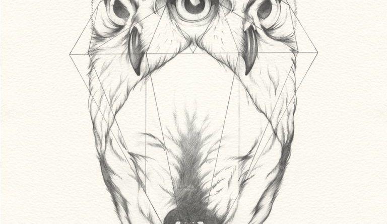 эскиз сова