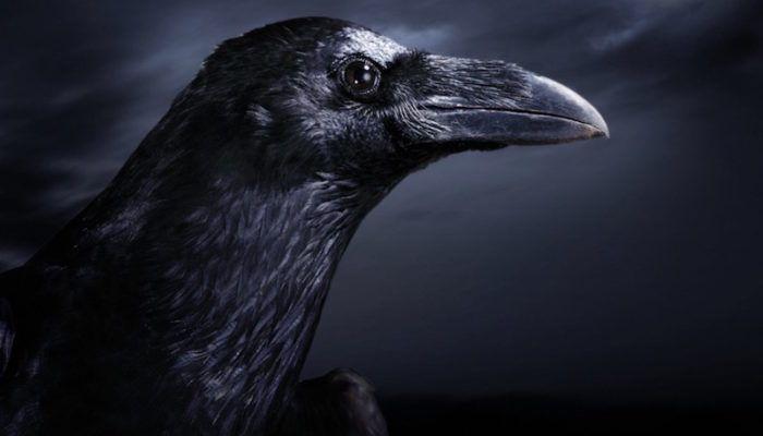 Тату Ворон: смысл и значение птицы в истории мира, фото