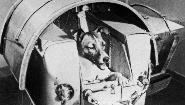 дворняга Лайка готовится к полету в космос