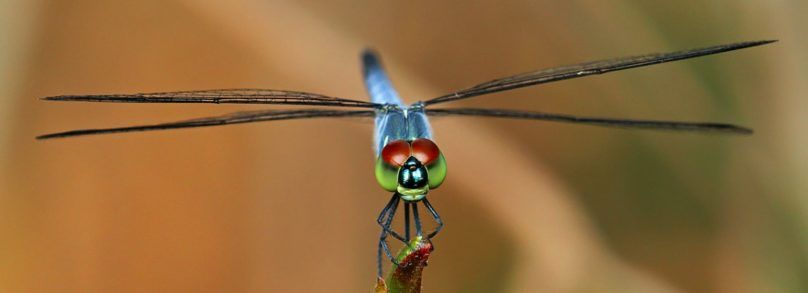 Dragonfly Meaning & Symbolism стрекоза
