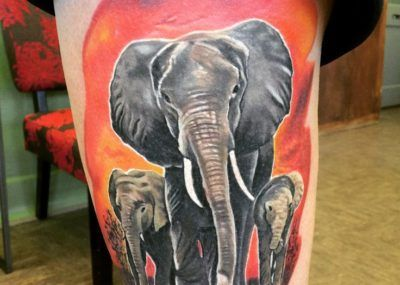 тату слон семья фото акварель