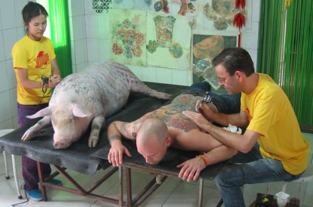 tattooed pig Wim Delvoye foto