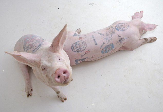 tattooed by Wim Delvoye тату