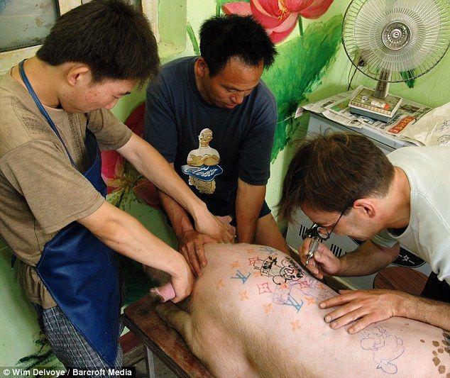 Свиньи могут быть заклеймены, но одна ферма превратила этот процесс в художественную форму, украсив ее с ног до головы татуировками