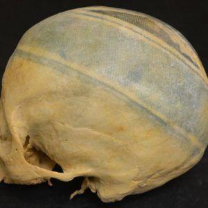 Найден череп с тату
